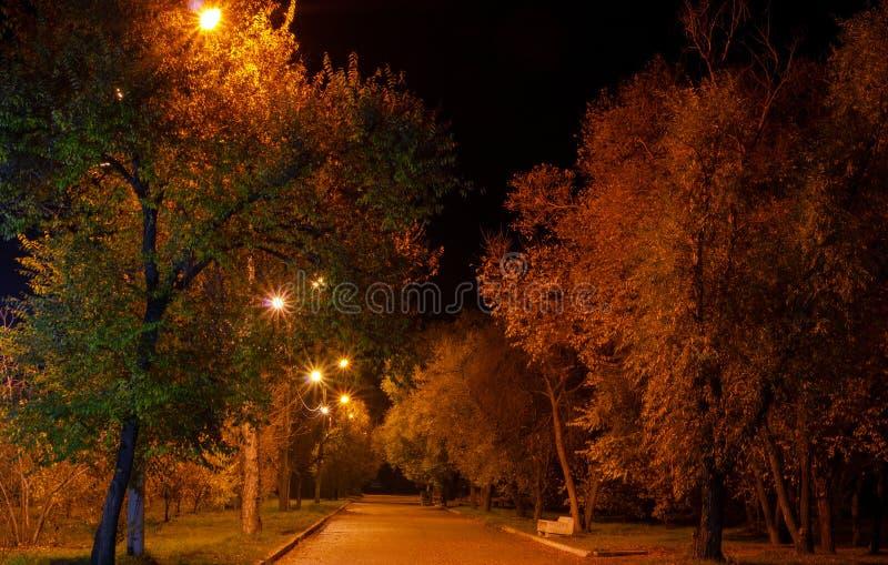 Ohne Leute nächtliche Gasse im Park, angesichts der Straßenlaternen lizenzfreie stockbilder