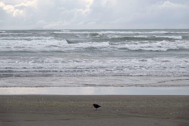 Ohope海滩在华卡塔尼,新西兰 图库摄影