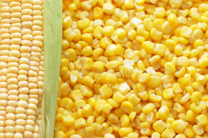 Ohr des frischen Mais und des konservierten Mais stockbild