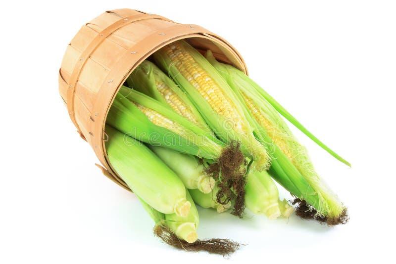Ohren des frischen Mais. stockfotografie