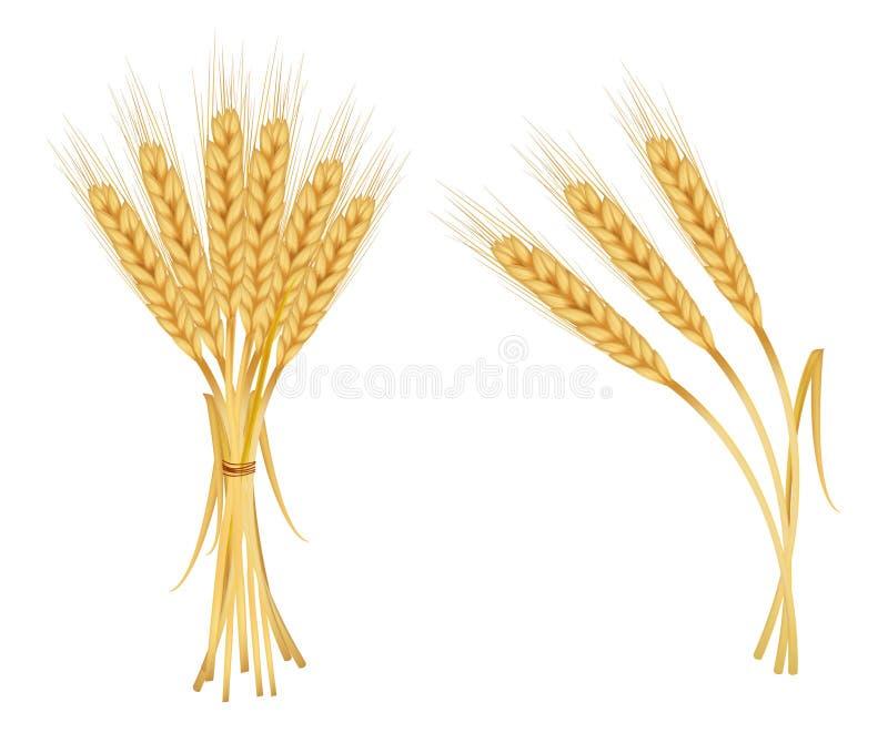 Ohren des Weizens getrennt auf Weiß. stock abbildung