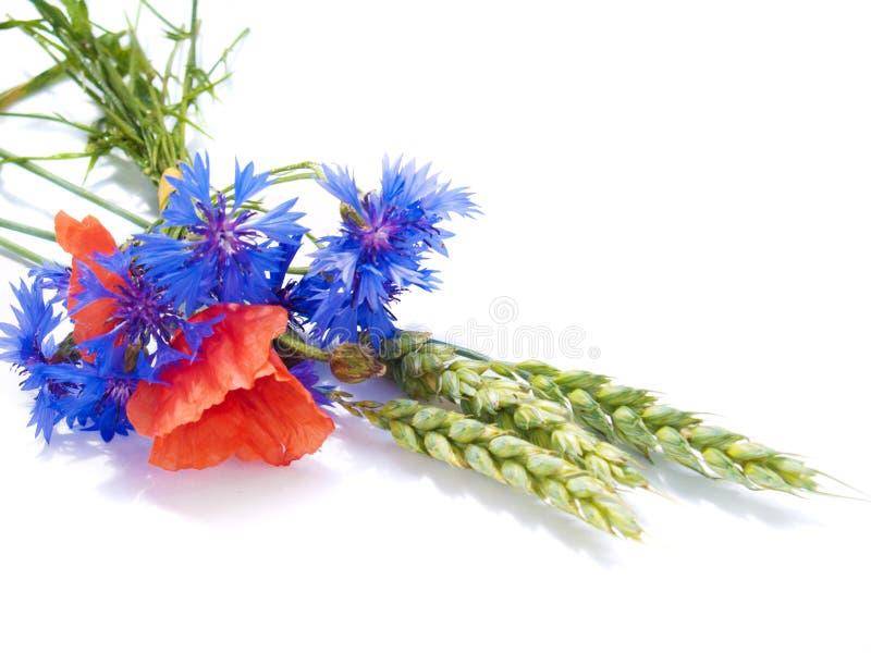 Ohren des Weizens mit Feldblumen stockfotografie