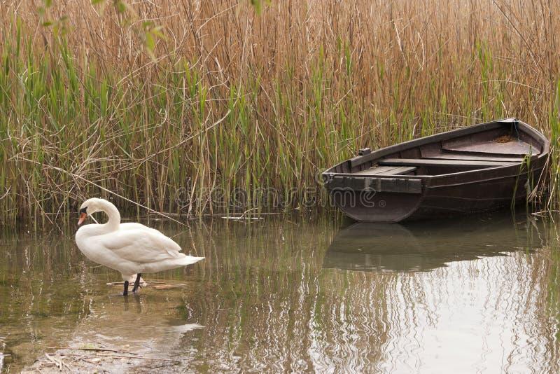 Ohrid lake. Boat and swan at Ohrid lake, Macedonia royalty free stock image