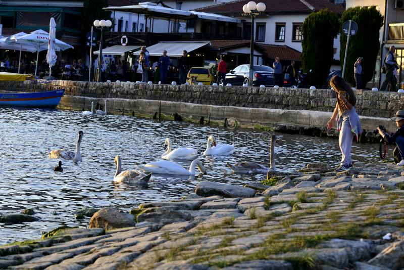 OHRID, MACEDONIA. OCTOBER 19, 2019- Girl feeding up swans in Lake Ohrid in Macedonia royalty free stock images