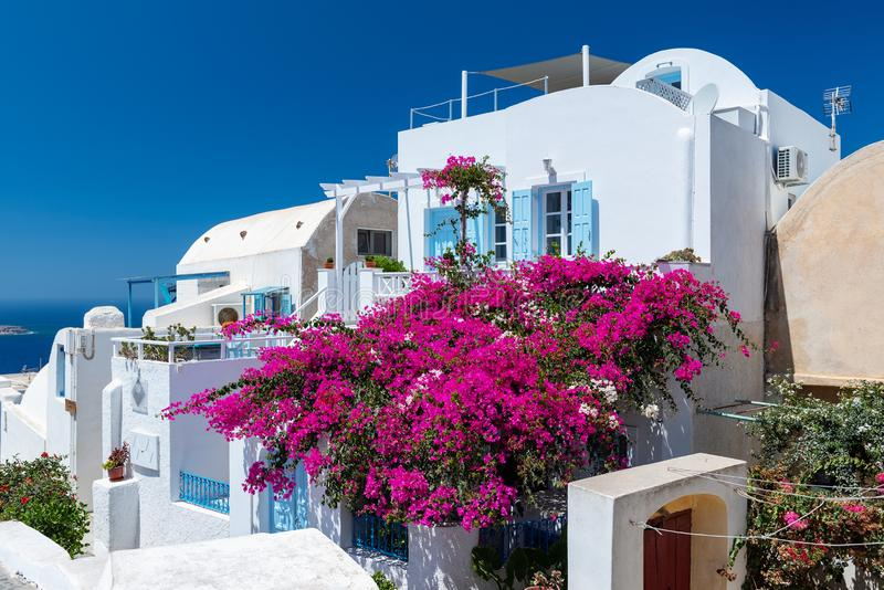 Traditional white Greek house with blossoming bougainvillea flowers at Santorini island. OIA, GREECE - AUGUST 2018: Traditional white Greek house with blossoming royalty free stock photography