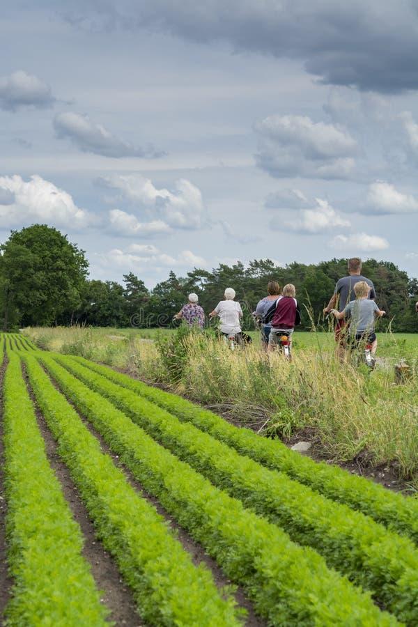 Oidentifierad familj med pensionärer och barn som rider cyklar längs morotfält i Nederländerna, utomhus- traditionell familj arkivbilder