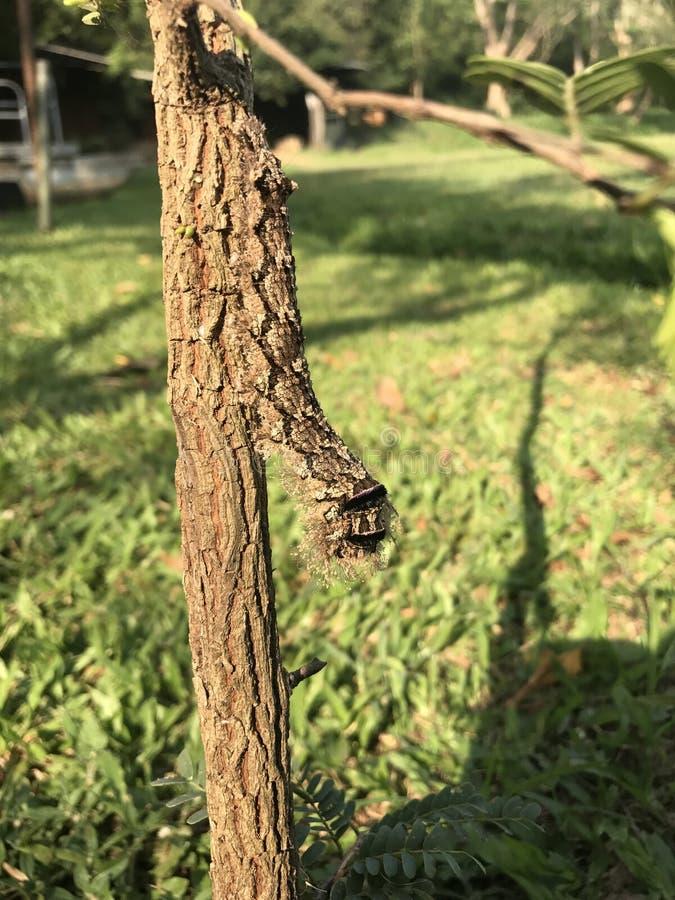 Oidentifierad larv fotografering för bildbyråer