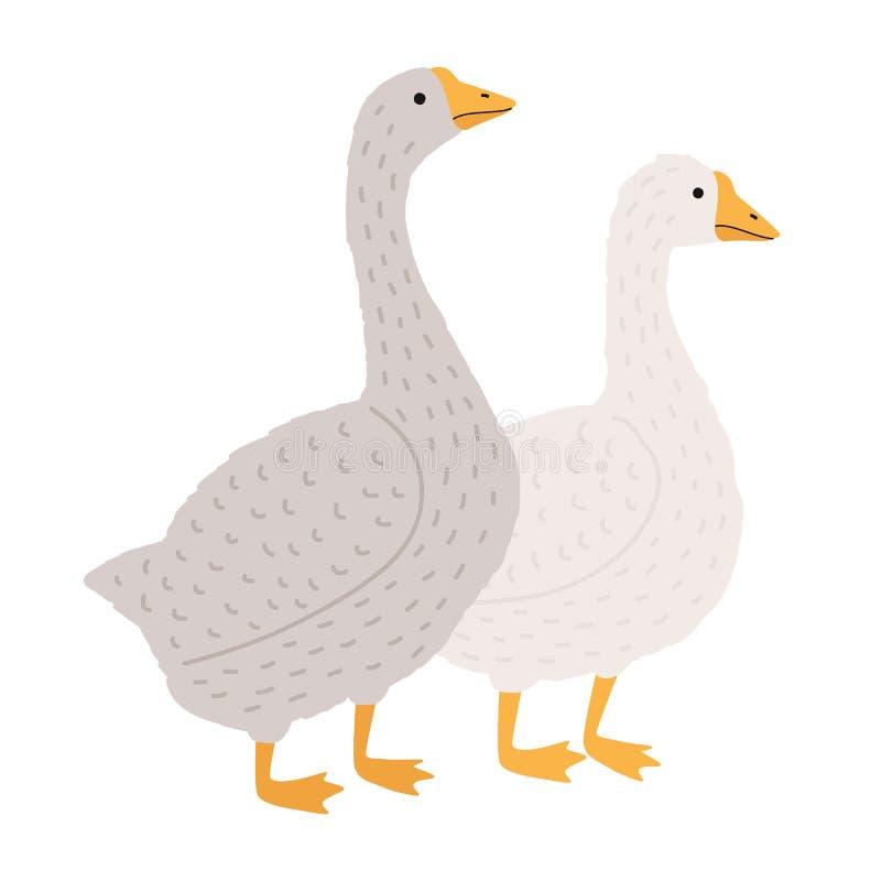 Oie adorable et canard d'isolement sur le fond blanc Paires d'oiseaux domestiques de bande dessinée drôle, volaille de ferme, vol illustration stock