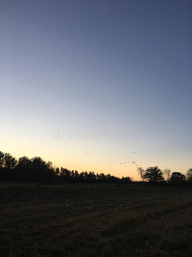 Oies canadiennes dirigeant des sud au lever de soleil image stock