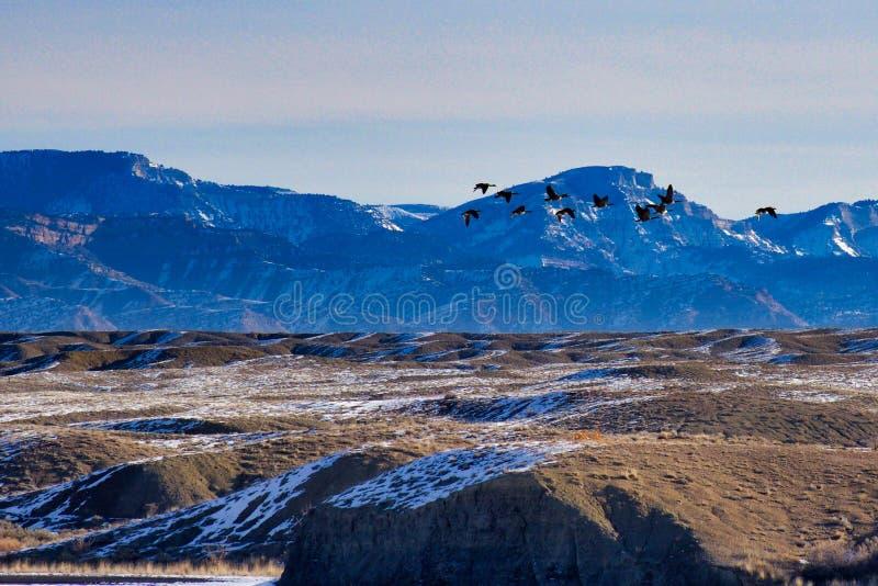Oies et montagnes photographie stock libre de droits