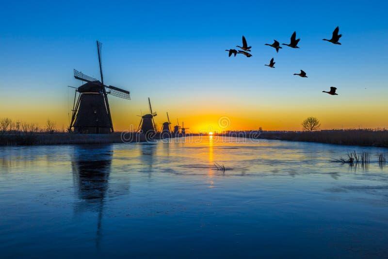 Oies volant au-dessus du lever de soleil sur l'alignement gelé de moulins à vent photo stock