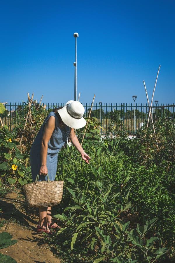 Oigenkännliga kvinnaplockninggrönsaker i kökträdgård arkivbild
