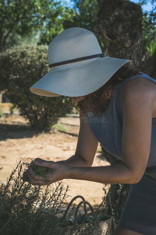 Oigenkännliga kvinnaplockninggrönsaker i kökträdgård royaltyfri fotografi