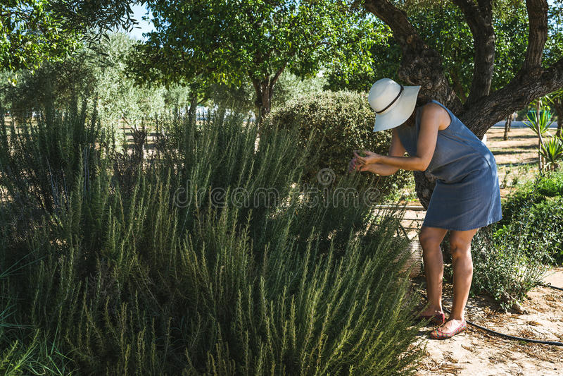 Oigenkännliga kvinnaplockninggrönsaker i kökträdgård arkivfoto