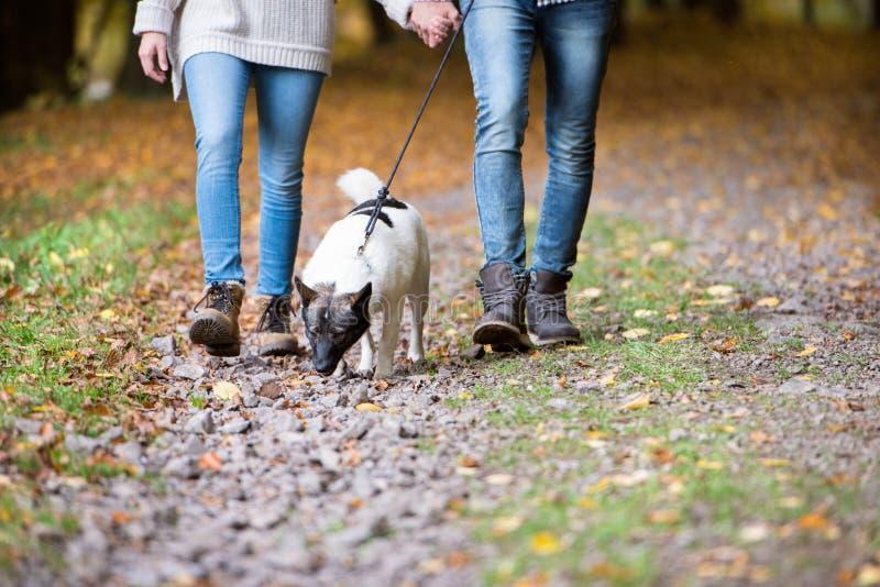 Oigenkännliga par med hunden som går i höstskog royaltyfri bild