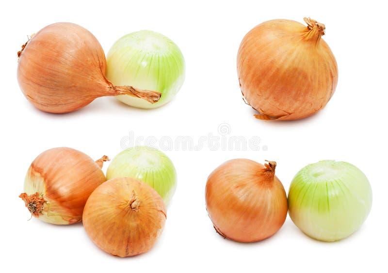 Oignon image stock
