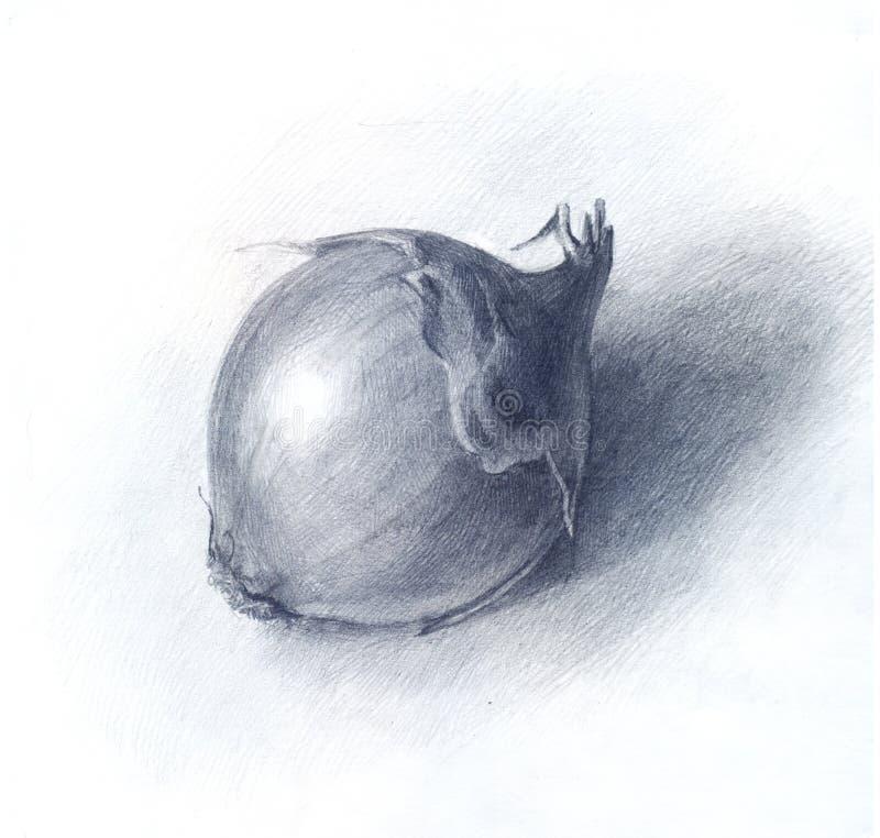 Oignon dessiné par le crayon, croquis tiré par la main illustration stock