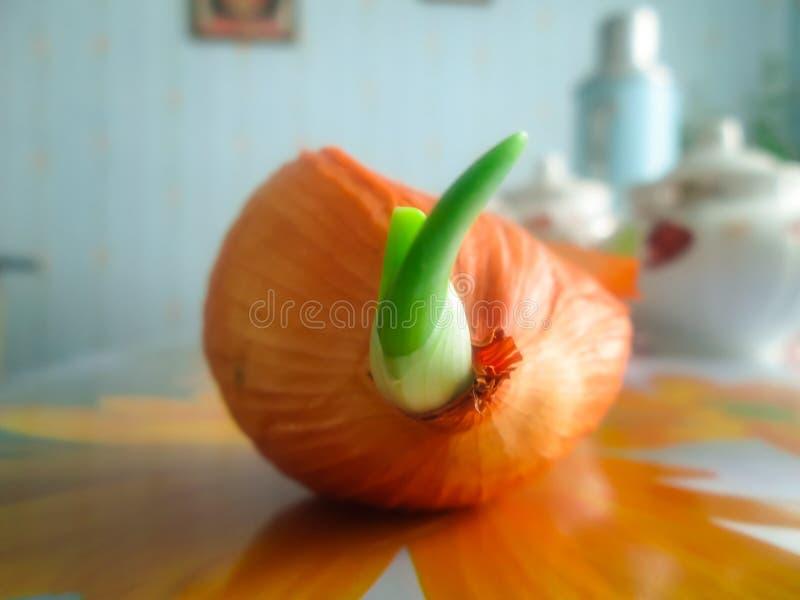 Oignon orange image libre de droits