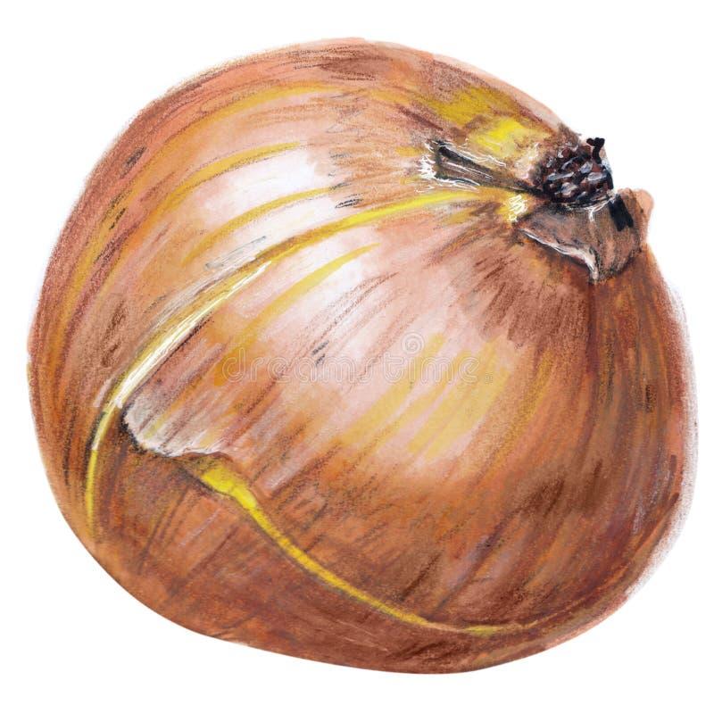 Oignon tiré par la main réaliste, marqueurs, crayons colorés illustration stock