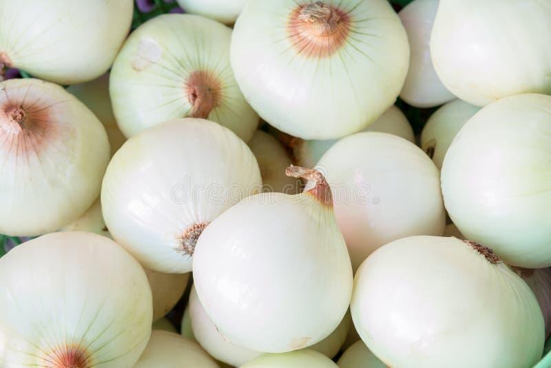 Download Oignons épluchés photo stock. Image du nature, oignon - 56485208