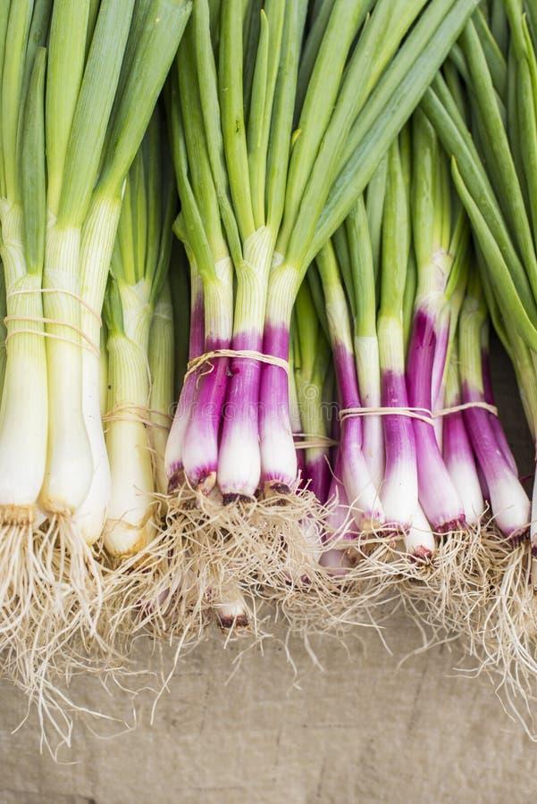 Oignons de ressort de salade pourpre et verte d'Allum, oignons blancs au loin photos libres de droits