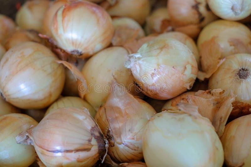 Oignons frais Oignons crus frais de fond d'oignons photo stock