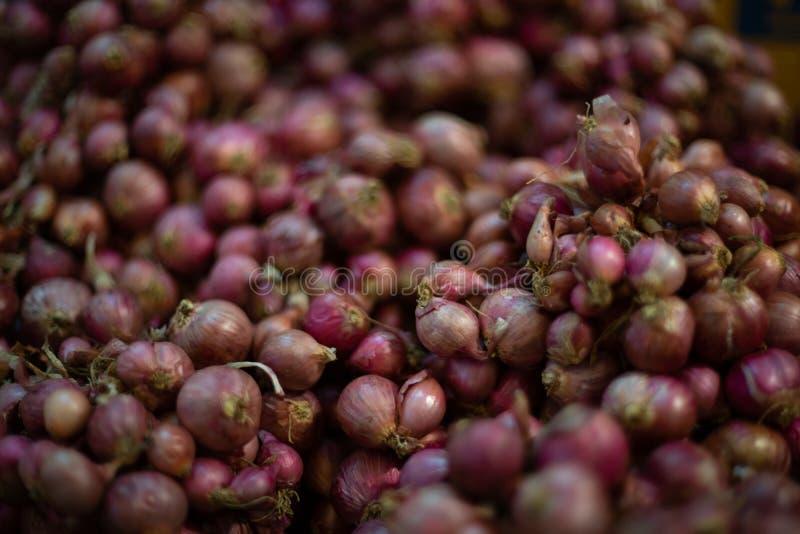 Oignons rouges organiques : Herbe pour la sant? photographie stock libre de droits