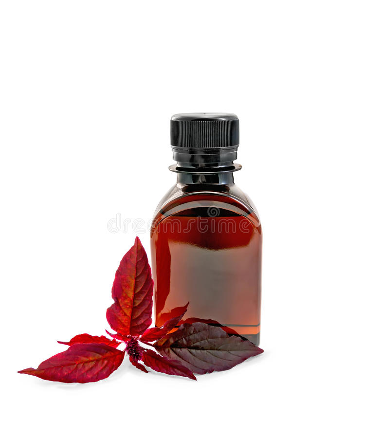 Oil with amaranth in dark bottle. A brown oil bottle with a branch burgundy amaranth with a light shade on white background stock photos