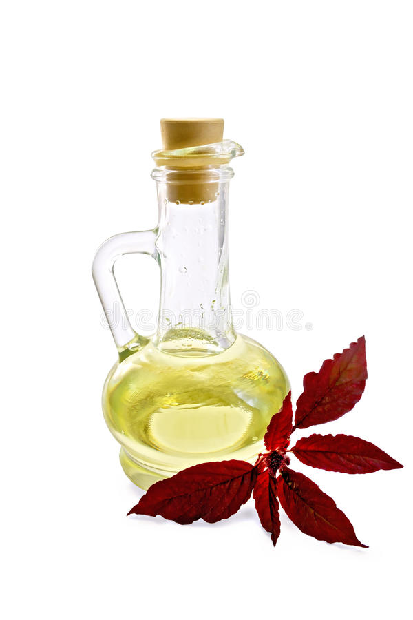 Oil with amaranth in decanter. Decanter with vegetable oil and a sprig of maroon amaranth with a light shade on white background stock image