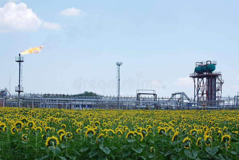Oil industry. Oil torch and a field of sunflowers royalty free stock image
