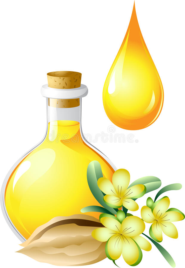 Oil of jojoba is in a bottle stock illustration