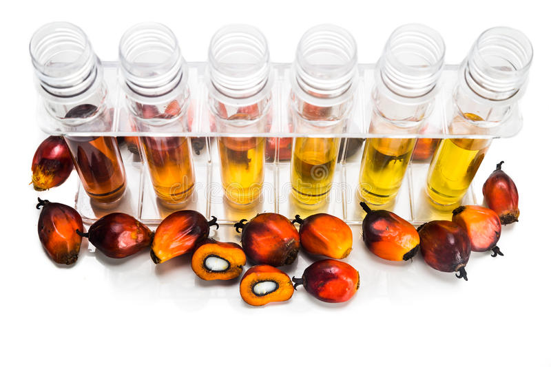 Oil palm biofuel biodiesel with test tubes on white background. Oil palm biofuel biodiesel with test tubes on white background royalty free stock photo
