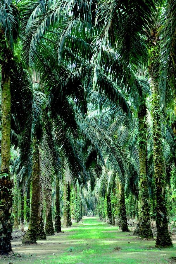 Oil Palm Estate stock photos