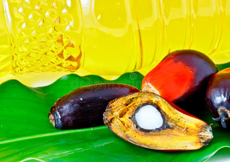 Download Oil Palm Fruit And Palm Olein Oil Stock Photo - Image: 23309922