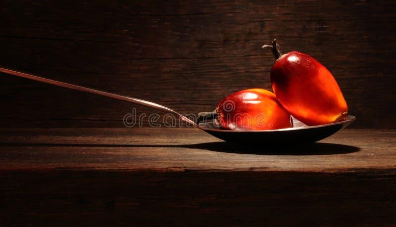 Oil palm fruit stock image