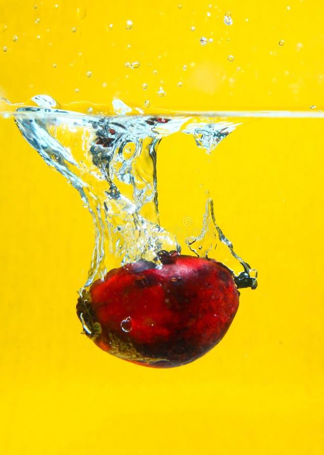 Oil Palm Fruits splash