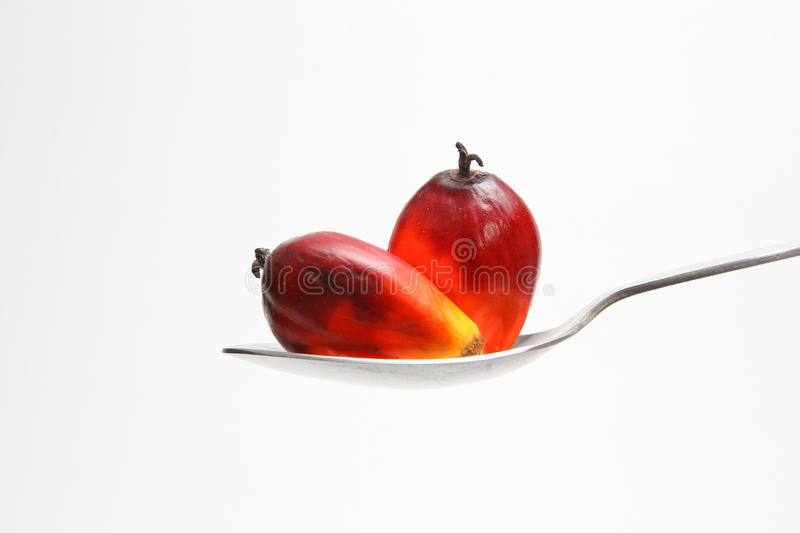 Oil palm fruits on spoon - Series 2. Ripe oil palm fruits on a spoon stock images