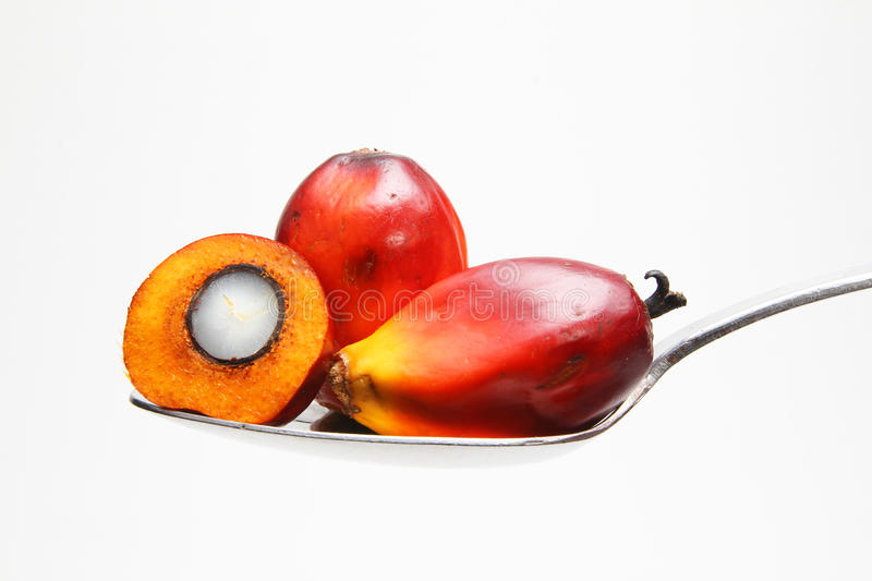 Oil palm fruits on spoon - Series 2. Oil palm fruits on a spoon. Palm oil is a widely used vegetable oil in food manufacturing royalty free stock photography