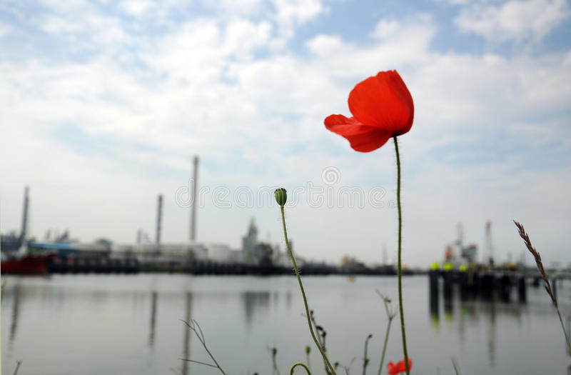 Oil Refinery with Poppy Rose royalty free stock image