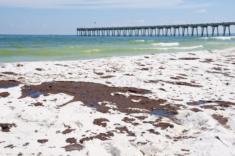 Download Oil Washes Ashore In Pensacola Beach Editorial Stock Photo - Image: 14860183