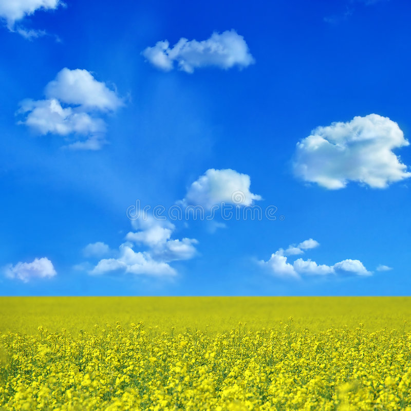 oilseed fotografering för bildbyråer