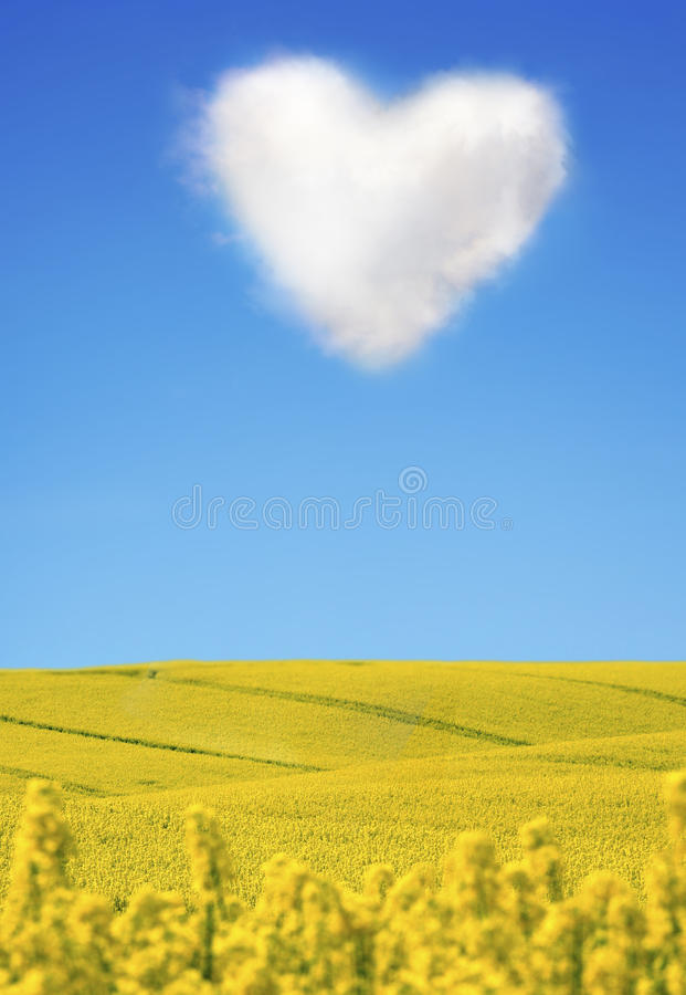Download Oilseed And A Heart Shaped Cloud Stock Image - Image: 23035971