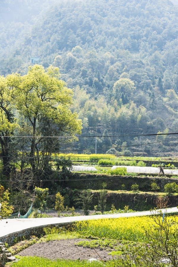 Oilseed farmland royalty free stock photo