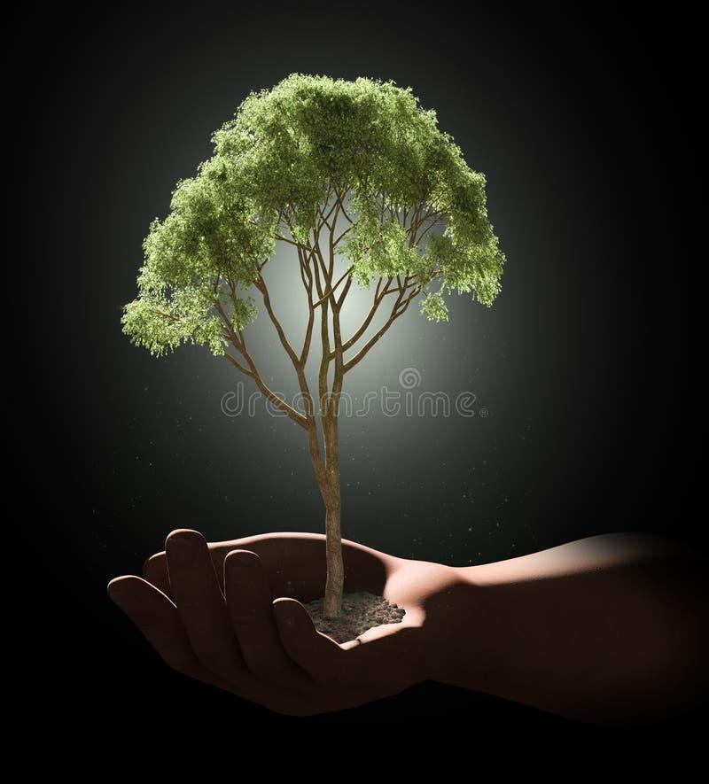 Oin Del árbol Una Palma De Una Mano Stock de ilustración ...