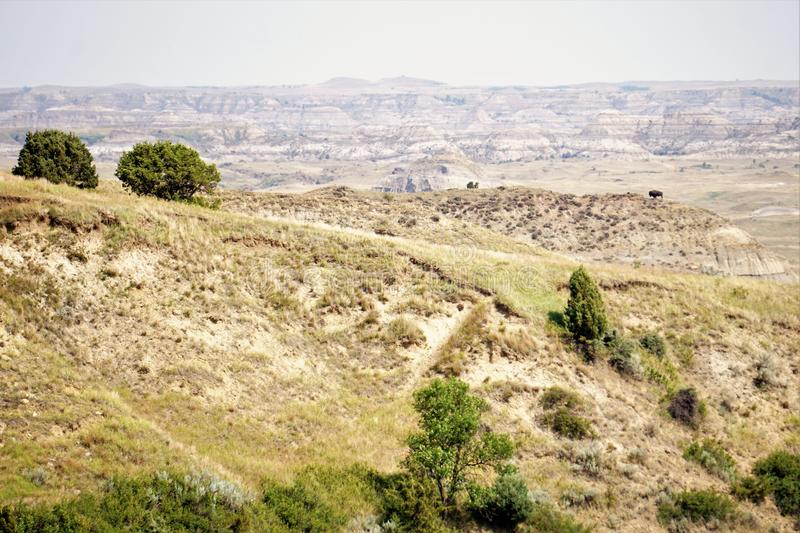 Ointressant landskap med bisonen royaltyfria bilder