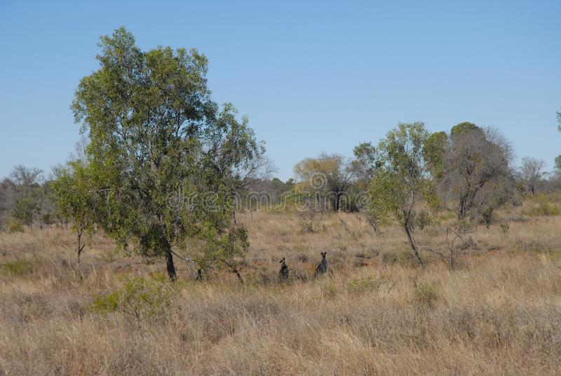 Ointressant torrt landskap, vildmark Queensland, Australien royaltyfri fotografi