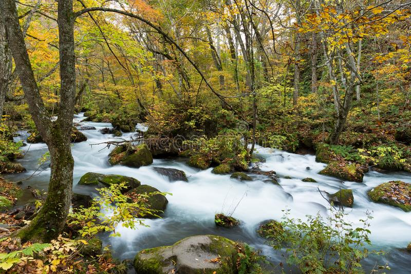 Oirase小河在秋天 库存照片