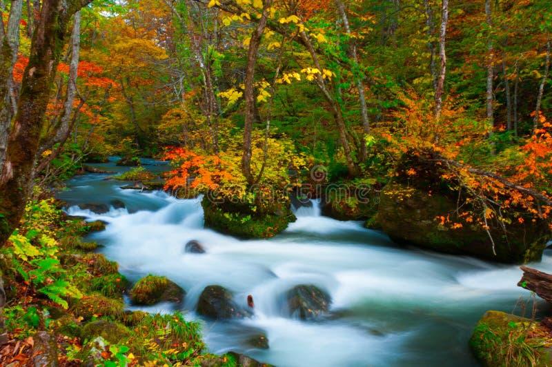 Oirase-Fluss in Aomori, Japan lizenzfreie stockfotos