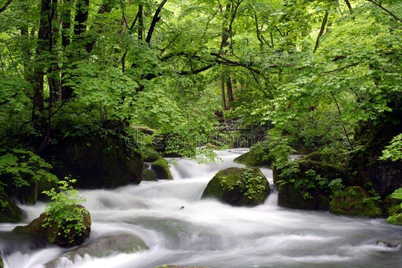 Oirase-gawa River stock photography