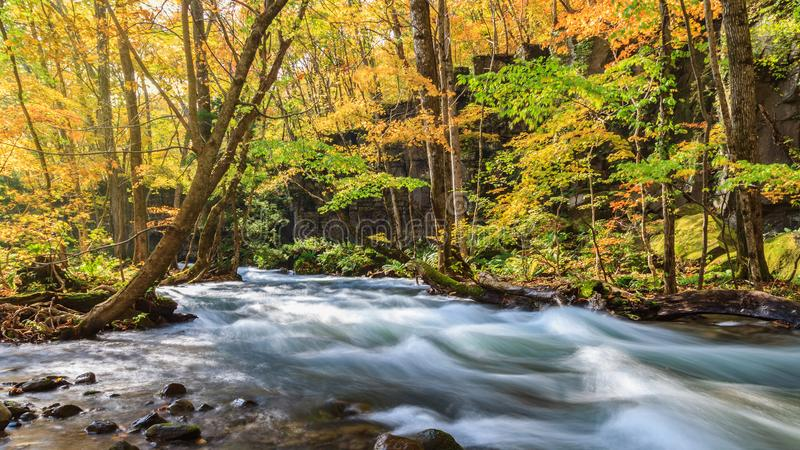 Oirase ström i höst på den Towada Hachimantai nationalparken i Aomori, Tohoku, Japan arkivfoton